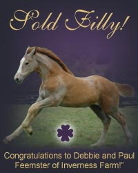 Sold Irish Draught and Irish Draught Sport Horses